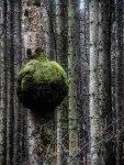 Ball-Baum