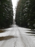 Winter Forstenrieder Park