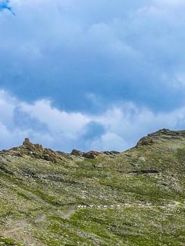 Schafe an der Ochsenlenke