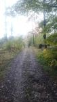 Feldweg Vogelsang