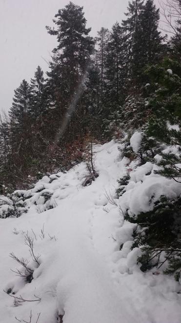 Winterlaufgelände