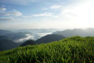 Schafreuter Gras