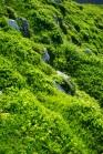 Auf 2.100 Meter ist das Gras frühlingsgrün.