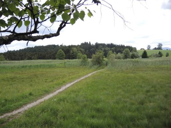 Erstes Zwischenziel und alter Bekannter: Das Rothenrainer Moor. Zahllose Male bin ich hier früher in die Schule nach Tölz geradelt.