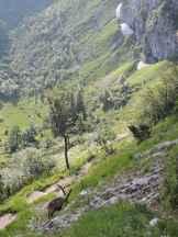 Steinböcke Benediktenwand